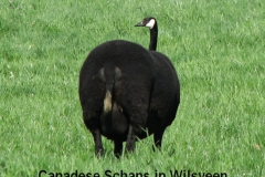 Weidevogels-007_Michel H2008