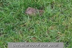 weidevogels-005_MarcovdT